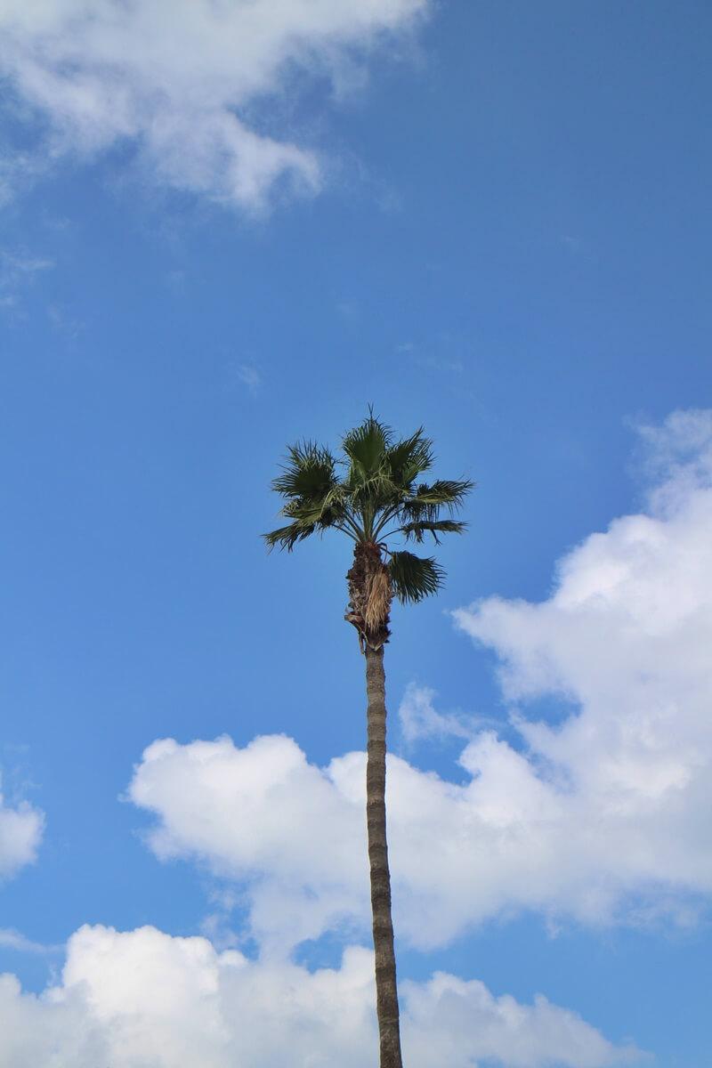 Amerika Genuss-mit-fernweh.de Fotografie Zypern
