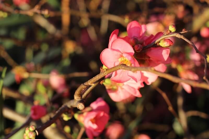 Die Rückkehr Auslandssemester Genuss-mit-fernweh.de Frühling zu Weihnachten Blumen
