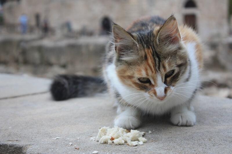 Zypern Cyprus Genuss-mit-fernweh.de Reiseblog Reisebericht Katze