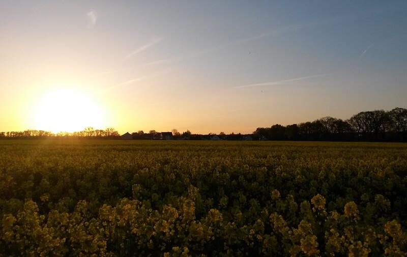 Mein Frühling - erste Sonne - Heimat - Sonnenuntergang - Rapsfeld - schönes NRW - Genuss-mit-fernweh.de