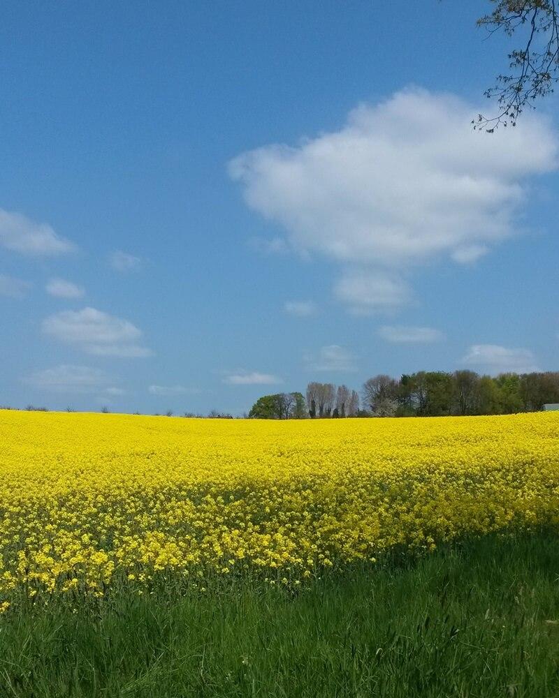 Mein Frühling - erste Sonne - Heimat - Sonnentag - Rapsfeld - schönes NRW - Genuss-mit-fernweh.de