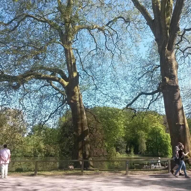 Mein Frühling - erste Sonne - Genuss-mit-fernweh.de - Dortmund Hörde - Rombergpark - Genuss-mit-fernweh.de