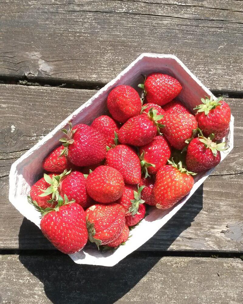 Mein Frühling - erste Sonne - Erdbeeren - Erdbeerzeit - Genuss-mit-fernweh.de