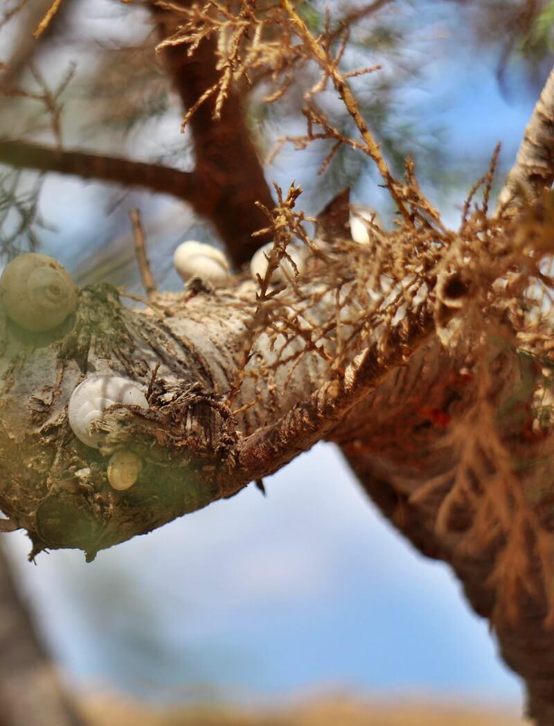 Sissi Beach - Stalis Malia Reiseblog Schnecken auf Baum