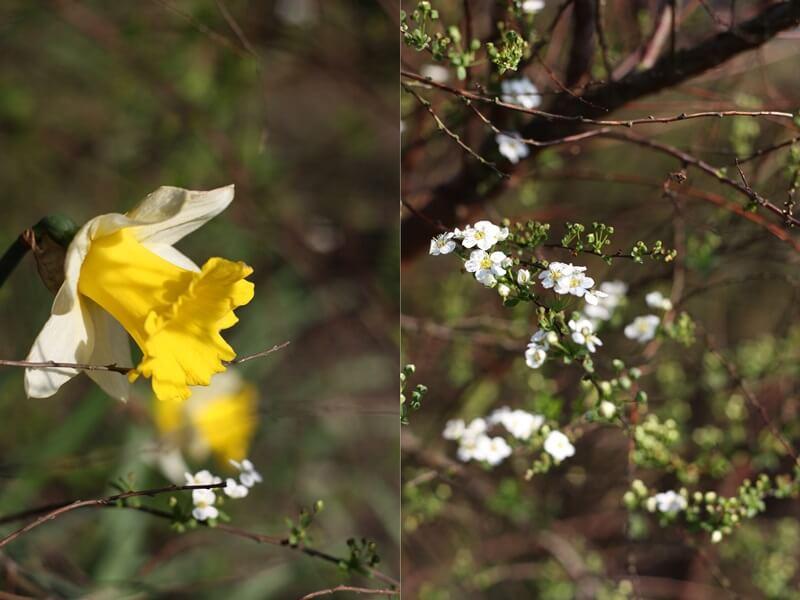 2016 - Foto des Monats März und April Genuss-mit-fernweh.de Blüten