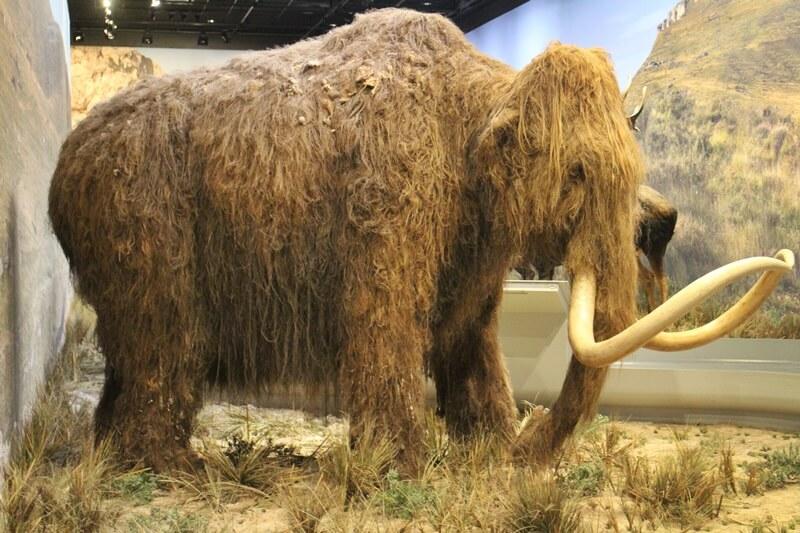 Chauvet-Höhle Vallon-Pont-d'Arc Reisebericht Reiseblog Genuss-mit-fernweh.de Mammut Ausstellung