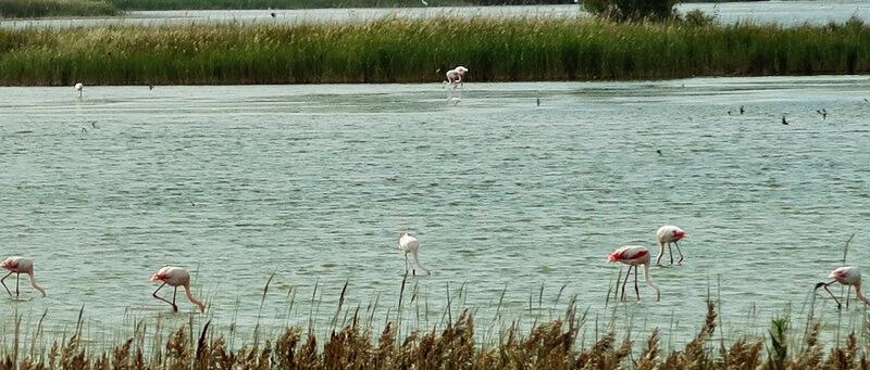 Camargue Flamingos Salzsee Genuss-mit-fernweh.de Reiseblog