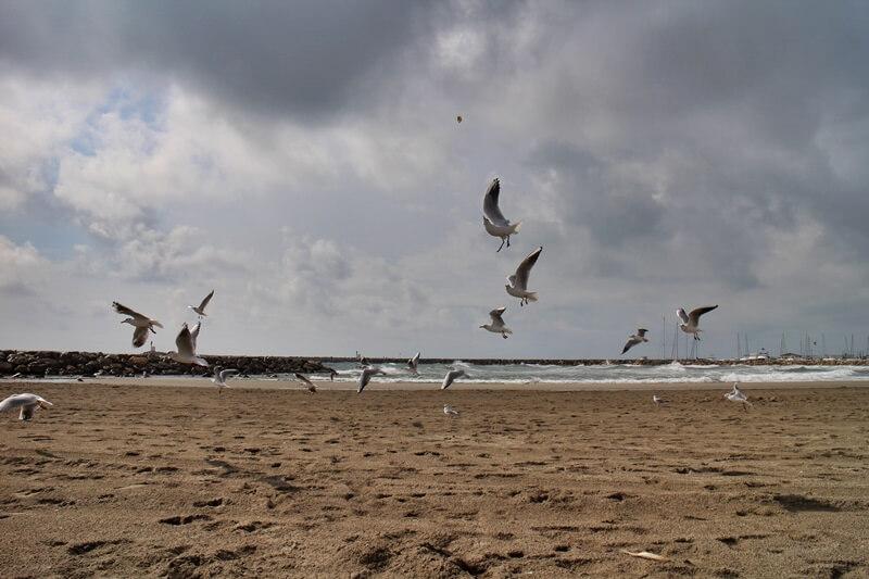 Saintes-Maries-de-la-Mer Camargue Reiseblog Genuss-mit-fernweh.de Möwen unterwegs