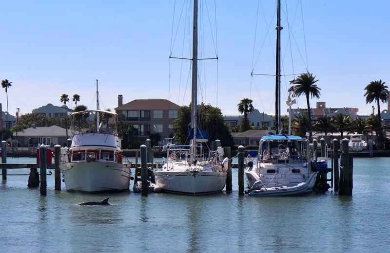 Clearwater Beach Florida USA Sunshine State Ausflugstip schönster Strand Floridas Hafen Delfin