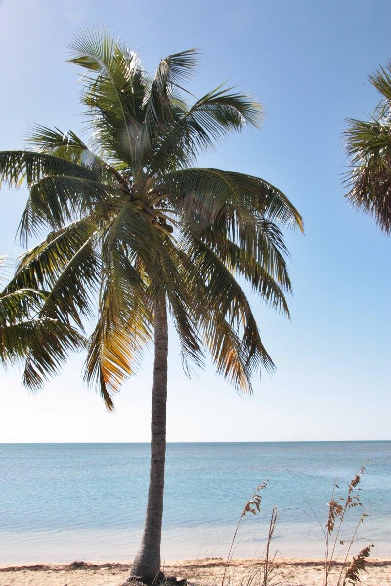 Florida Keys U.S. Highway 1 von Miami bis nach Key West Reisebericht Genuss-mit-fernweh.de Palmen Veteranen Denkmal Ausblick Seven Mile Bridge