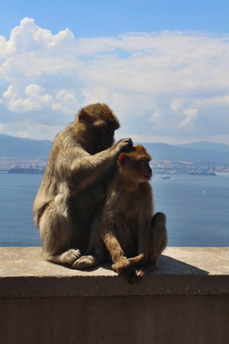 Gibraltar Genuss-mit-fernweh.de Reisebericht Städtetrip Affenfelsen