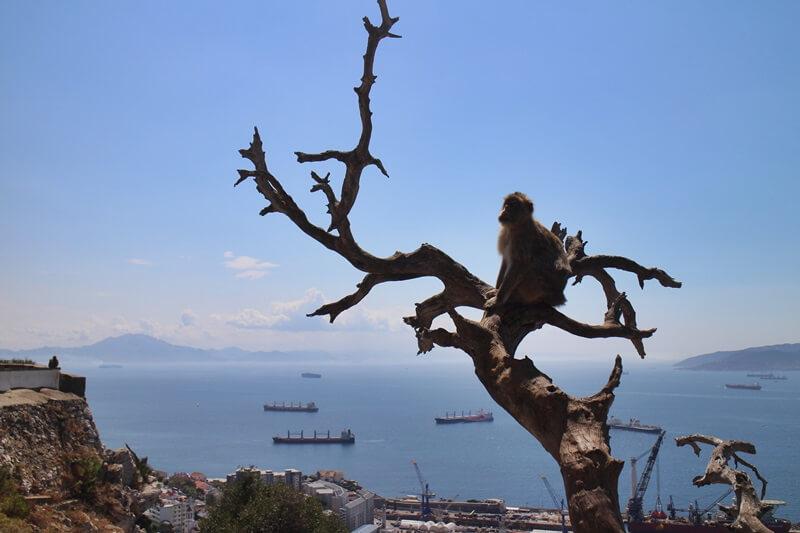 Gibraltar Genuss-mit-fernweh.de Reisebericht Städtetrip Bucht von Gibraltar