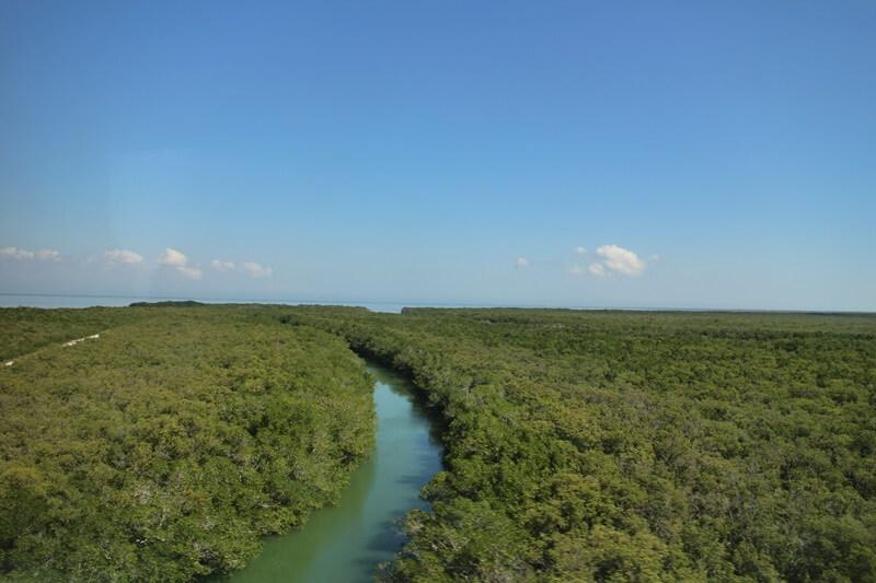 Florida Keys U.S. Highway 1 von Miami bis nach Key West Reisebericht Genuss-mit-fernweh.de Mangrovenwälder